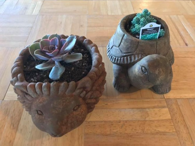 Stop into Stevens Farm & Greenhouses today and pick up a hedgehog or turtle cement planter!Great for succulents!