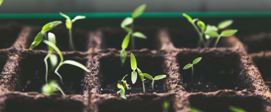 Upgrade your Garden with Vegetable Seedlings